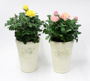 バラ石鉢4