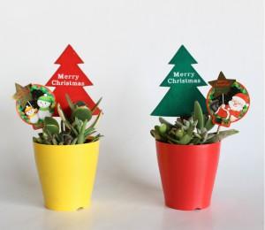 クリスマス多肉植物