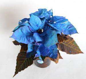 ラメ付きポインセチア青