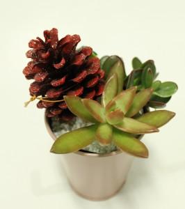 クリスマス用多肉植物2