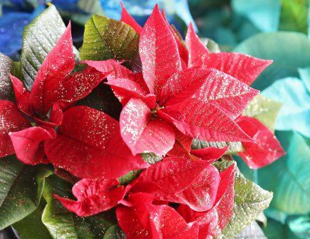 花と緑の魅力を存分に『おもてなし』の心で推進する。新潟中央卸売市場 株式会社新花です。